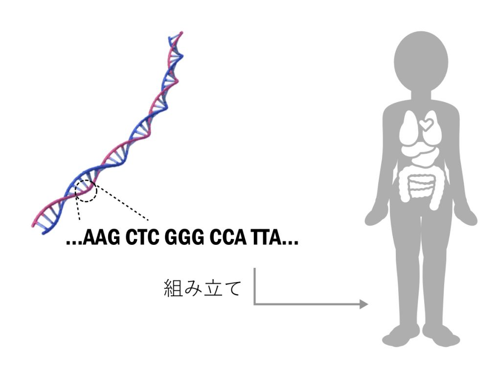 DNA配列とそのからだ