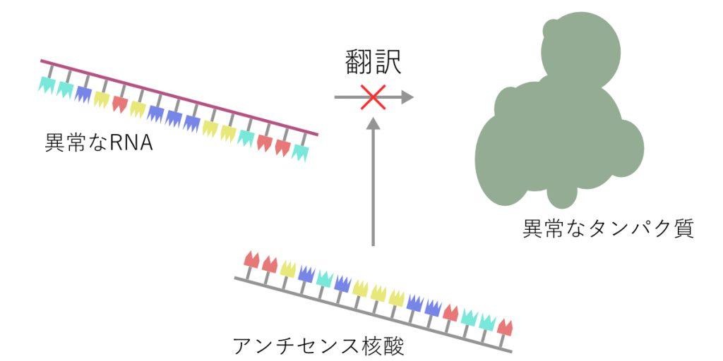 アンチセンス核酸によるタンパク質翻訳の抑制