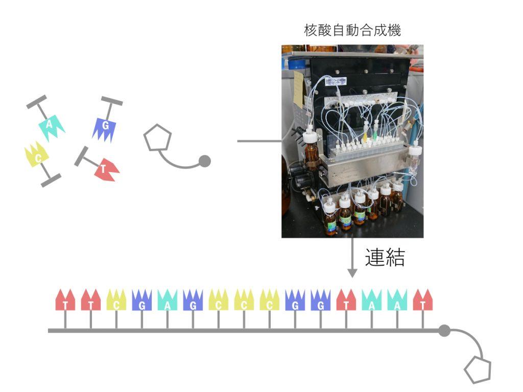 核酸の合成